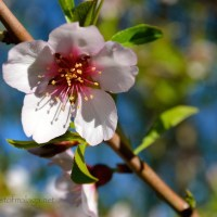 It's Almond Blossom time in Andalucía!