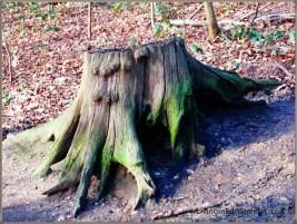 stump - pretty?