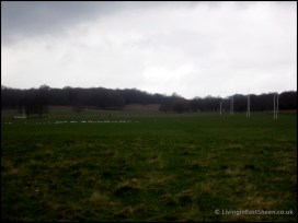 Rugby and birds, not an unusual combination...winks.