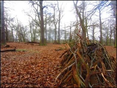 Leaves to kick up underfoot, hoorah!