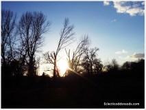 The sun reaches through