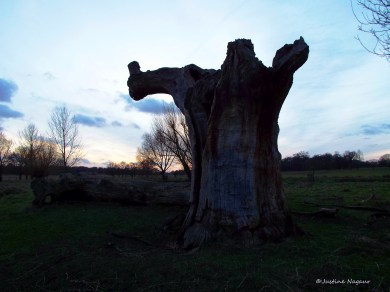 The tree in the sunset