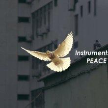 Dove flying through a city