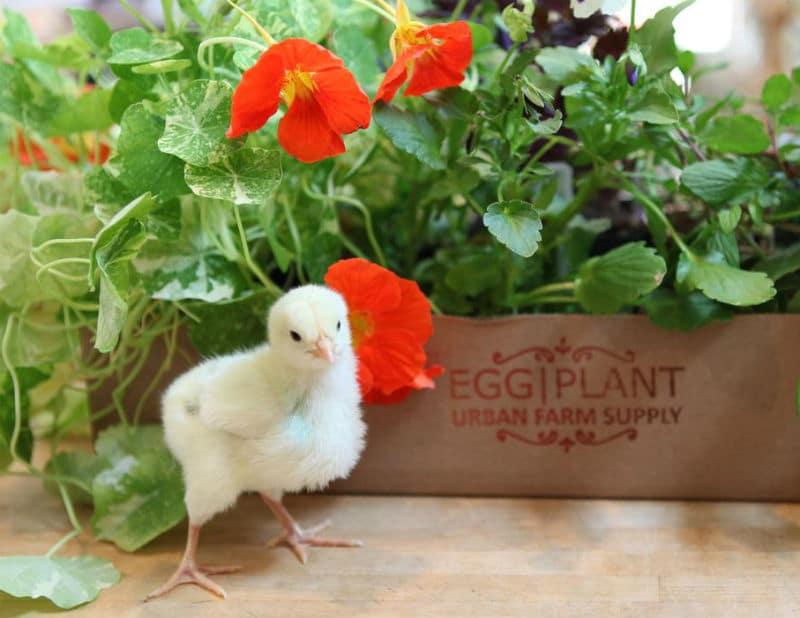 Egg Plant Farm Supply
