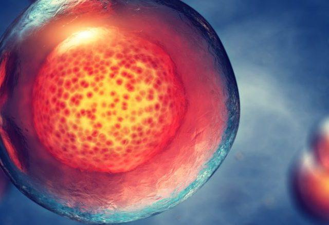 regenerative therapy stem cells