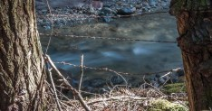 The remains of an old barbed-wire fence along lower Fargo Brook.