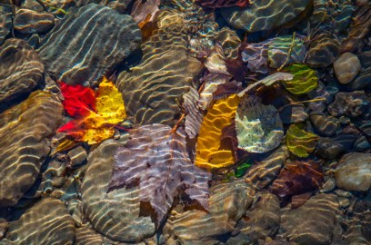 Another look at leave, water, and reflections in Fargo Brook.