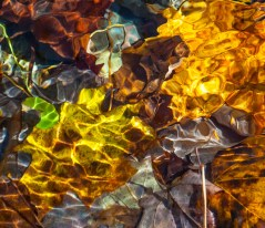 Another impressionistic shot of colorful leaves in Fargo Brook.