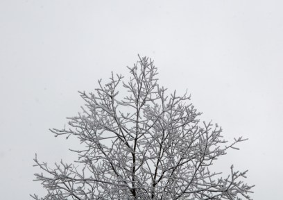 Snow-laden ash branches like a deer's velveted antlers...