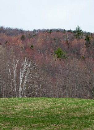 The subtle colors of spring up on Shaker Mountain Road.