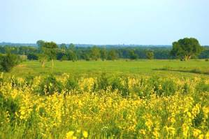 395-texas-meadow