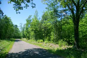 24.3-east-texas-piney-woods-road-small