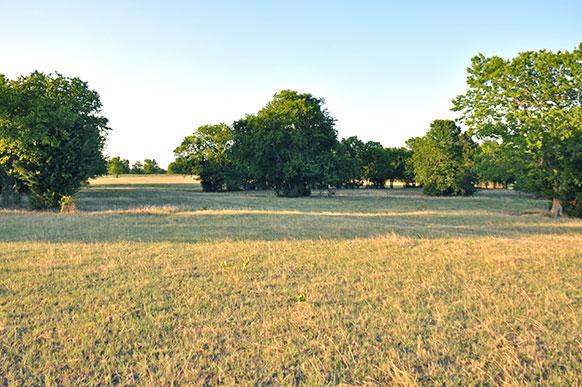 Delta240-meadow2