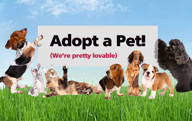 Animal Shelter Cr Adopted Dogs Need Pics