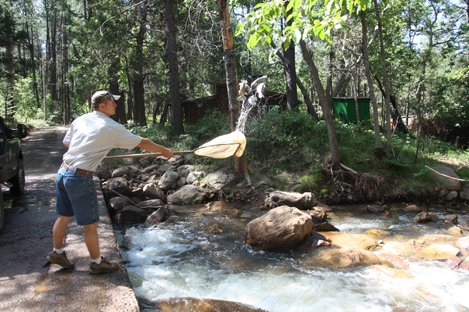 Stocking East Verde River with Trout