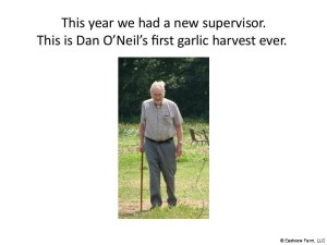 Garlic_Harvest_2017-12