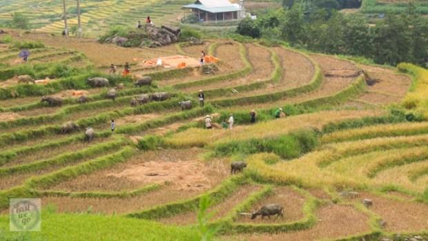 Sapa Vietnam-83