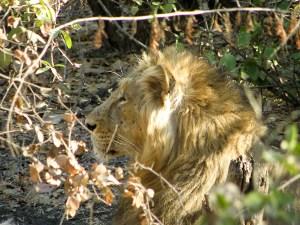 Tirkistelyä leijonien makuuhuoneeseen