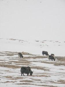 Khunjerabin sola on melkein yhtä korkealla, kuin Alppien korkein huippu!