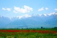 Unikkoja Kirgisian arolla