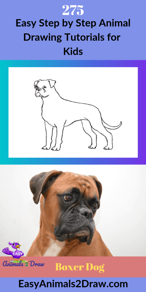 Pinterest image how to draw a boxer dog