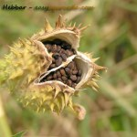 Excellent Opportunity To Sell Medicinal Herb Photographs