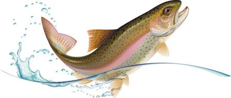 Fish Benefits, Side Effects – Ayurveda Details | Easy Ayurveda
