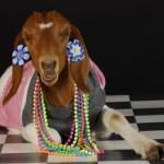 Goat Meat Benefits As Per Ayurveda