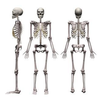 Asthi Shareera – Definition, Anatomy, Types Of Bones | Easy