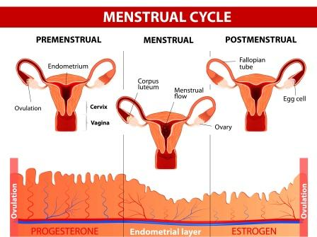 Low Menstrual Bleeding: Causes, Remedies, Ayurvedic Treatment
