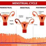 Hypomenorrhoea: Causes, Remedies, Ayurvedic Treatment