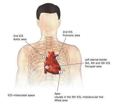 auscultation points for heart