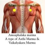 Amsaphalaka Marma: Components, Location, Effect Of Injury