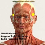 Shankha Marma: Location, Components, Effect Of Injury
