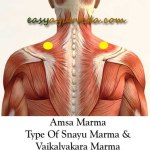Amsa Marma: Components, Location, Effect Of Injury