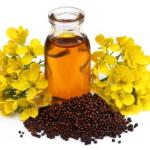 Katu (Sarshapa) Taila Murchana: Special Processing Of Mustard Oil