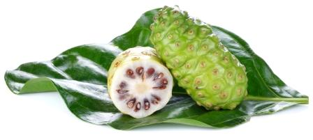 Indian Mulberry Noni Uses Research Remedies Side Effects