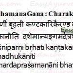 Angamarda Prashamana Gana – Analgesic Group Of Herbs Of Charaka