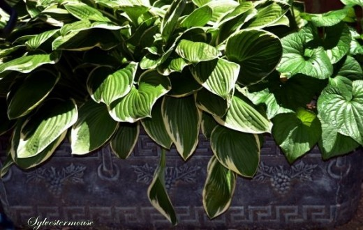 Verdigris painted concrete planter