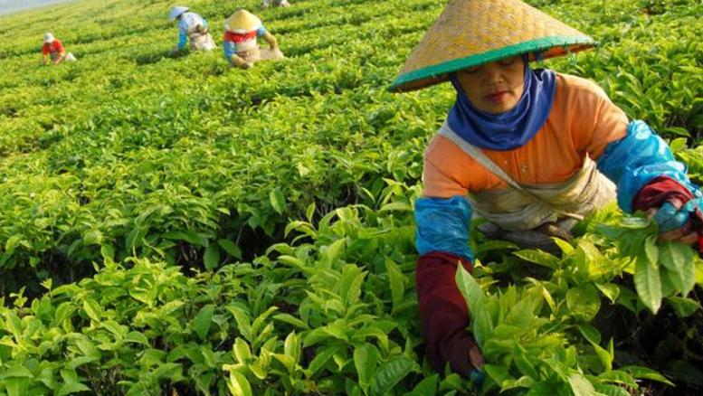 Peran Agrikultur di Indonesia