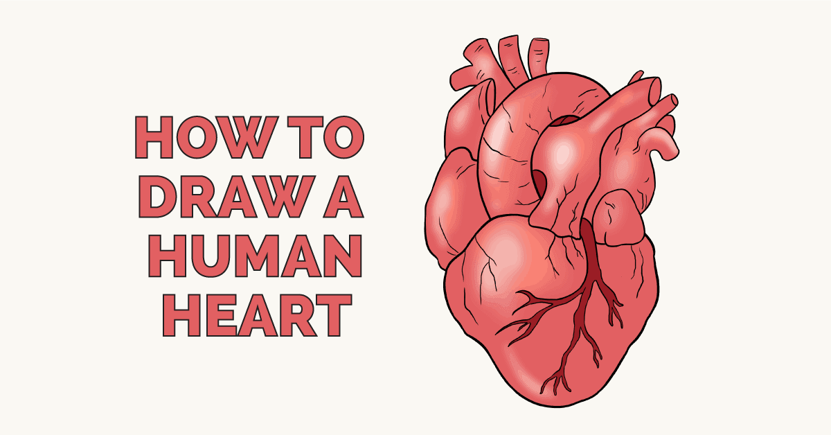 How To Draw A Human Heart Really Easy Drawing Tutorial