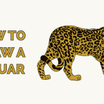 How To Draw A Jaguar Really Easy Drawing Tutorial
