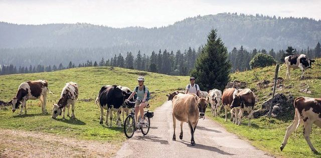 Easy E-Biking - electric bicycles mountains Switzerland, helping to make electric biking practical and fun