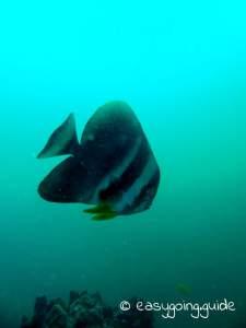 fish_thailand_diving