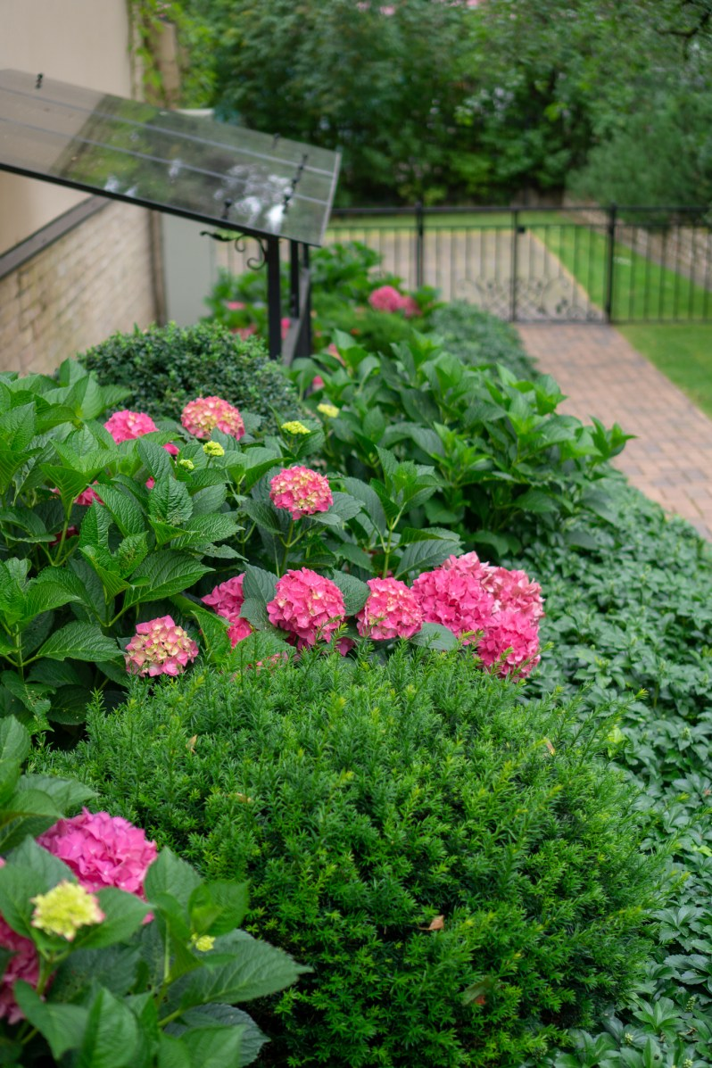 Countryside garden flowers