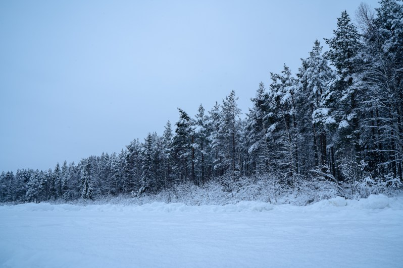 Rovaniemi forest