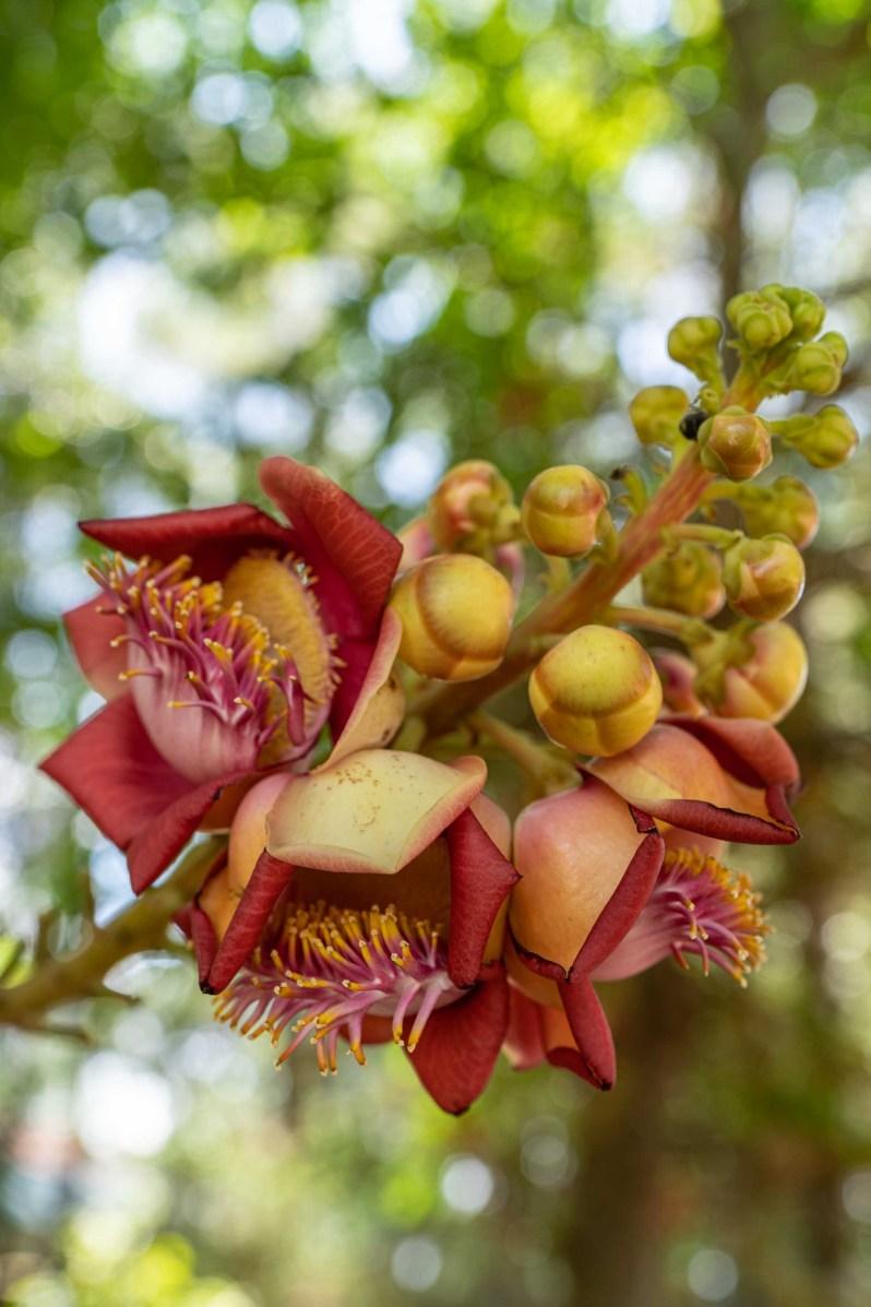 Vietnam holiday - flower