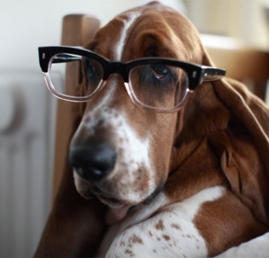 dog-with-my-glasses-profile-picture