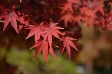 鶴見緑地の紅葉2014その11