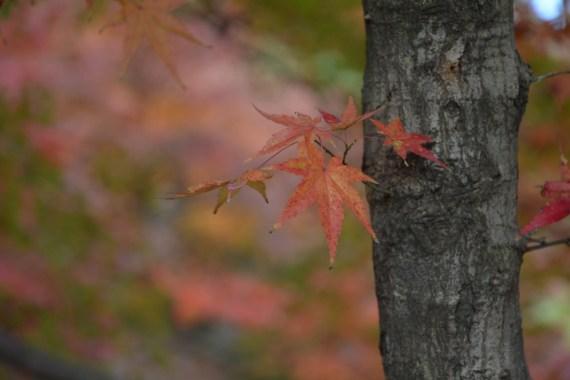 鶴見緑地の紅葉2014その16